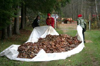 Nouvelle technique de ramassage de feuilles.